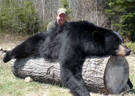 Chasse à l'ours / Pourvoirie des Bouleaux Blancs